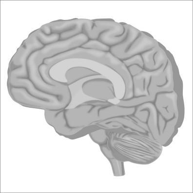 brain1-12Nov19