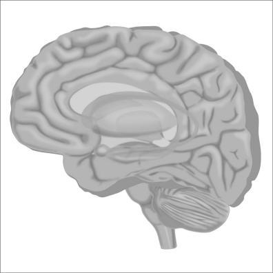 brain2-12Nov19