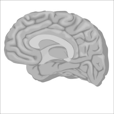 brain3-12Nov19