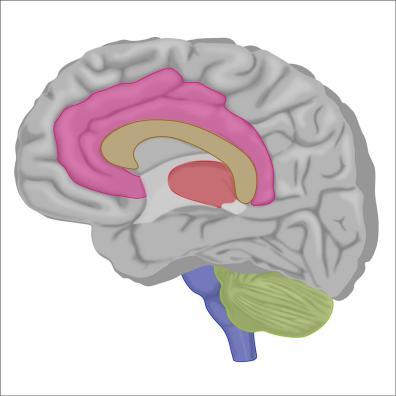 brain4-12Nov19