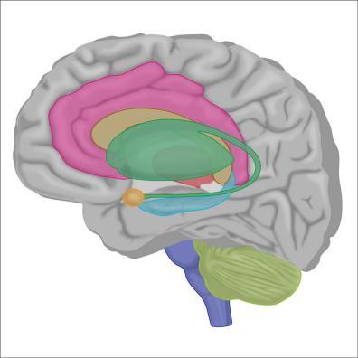 brain5-12Nov19