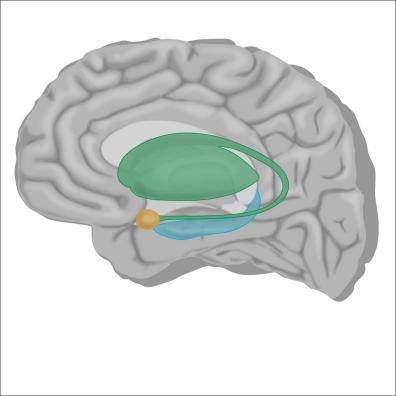brain6-12Nov19