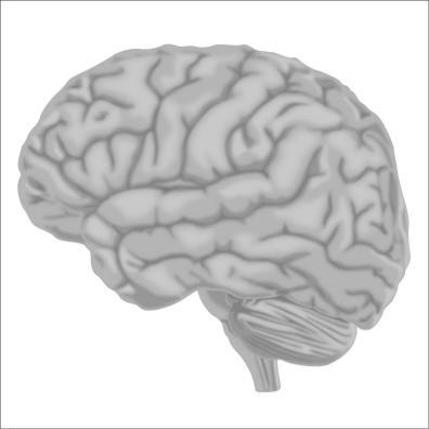 brain7-12Nov19