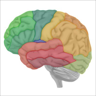 brain8-12Nov19