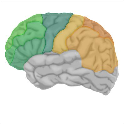 brain9-12Nov19